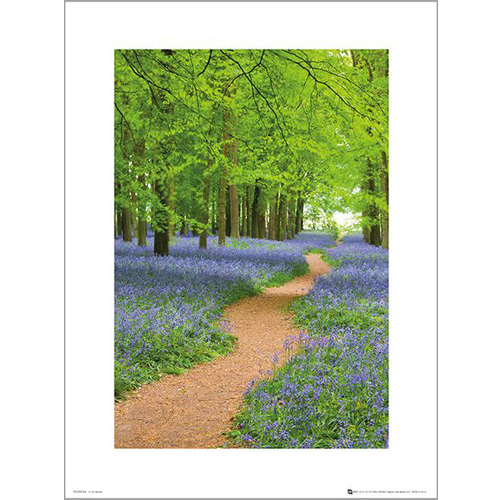 PDH00954 Tom Mackie - Path (40x50)
